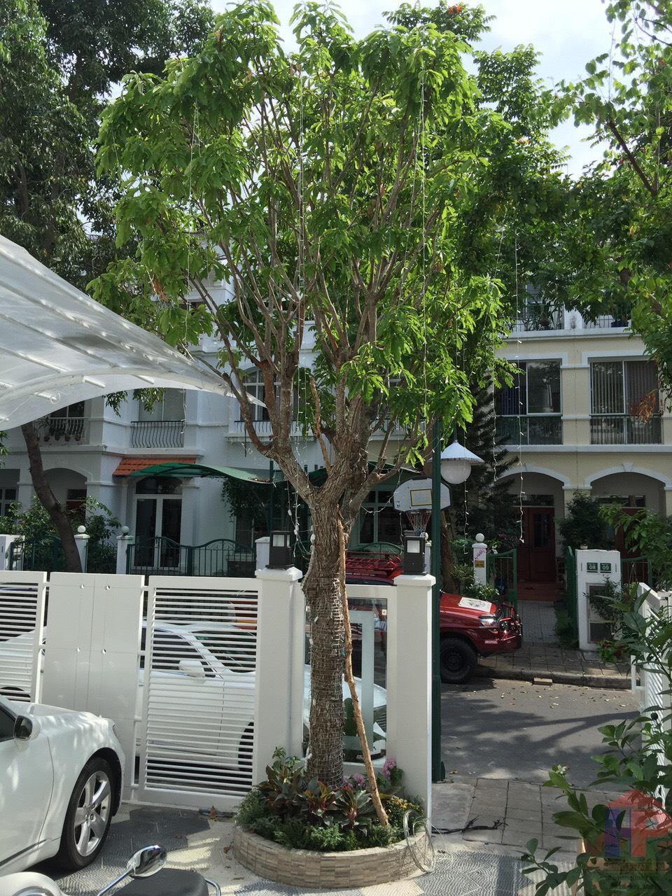 bán nhà khu dân cư kiều Đàm, 1 trệt – 2.5 lầu, DT 4.5x22m, giá 11.3 tỷ